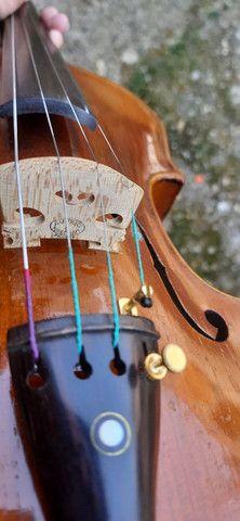 Violino europeu - Foto 4