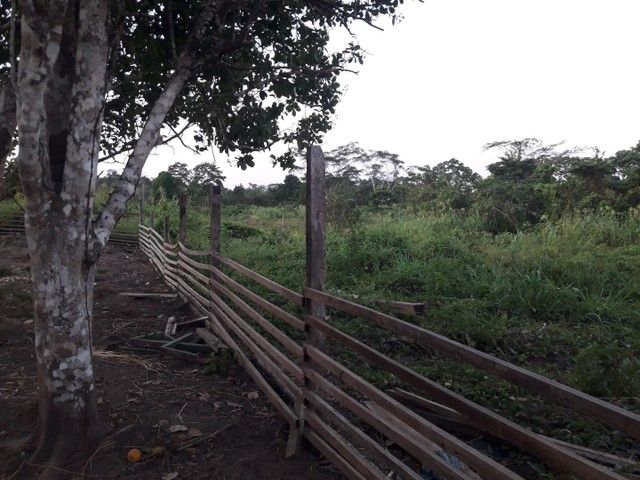 Vendo uma colônia em Sena Madureira Rio purus - Foto 2