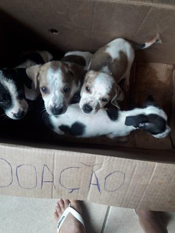 Doação de cães