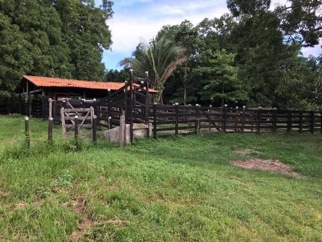 Bela fazenda com 450 hectares, super estruturada em Itapecuru -Mirim! - Foto 5