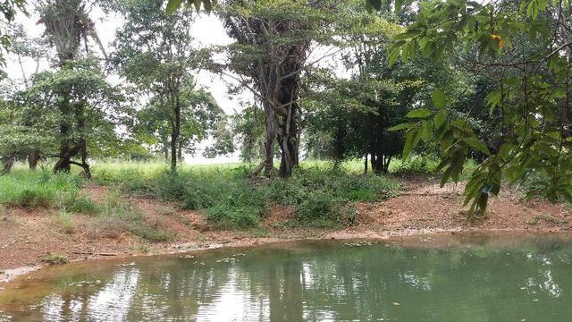 (Fazenda com 297ha em Mato Grosso) no município de Alto Paraguai(MT-409 KM35) - Foto 10