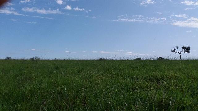 (Fazenda com 297ha em Mato Grosso) no município de Alto Paraguai(MT-409 KM35) - Foto 18
