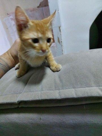 Doação gato macho - Foto 3
