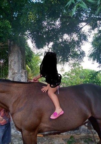 Vendo egua de esteira ou troco em cavalo - Foto 3