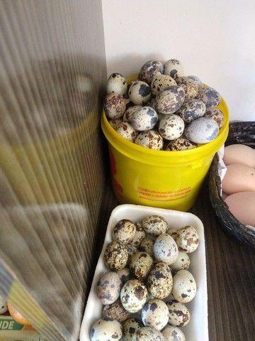 Ovos caipira - Foto 3