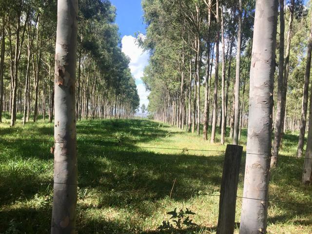 Fazenda em Frutal Minas Gerais Triângulo Mineiro - Foto 20