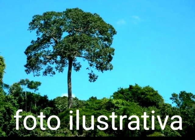 Fazenda com 3.000 hectares no Amazonas, município de Itapiranga