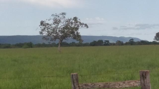 (Fazenda com 297ha em Mato Grosso) no município de Alto Paraguai(MT-409 KM35) - Foto 20