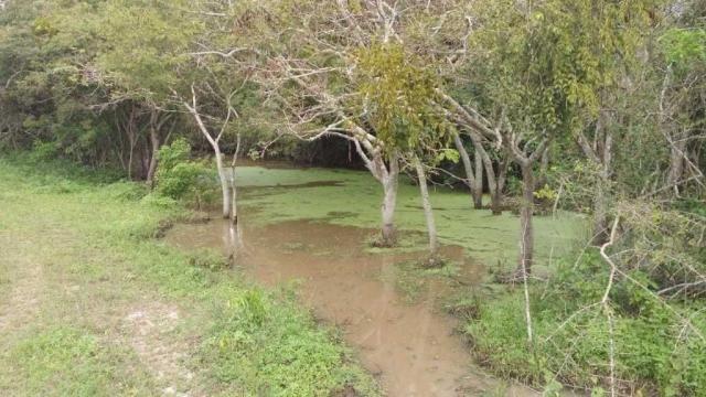 Excelente Fazenda em Feira de Santana-BA - Foto 10