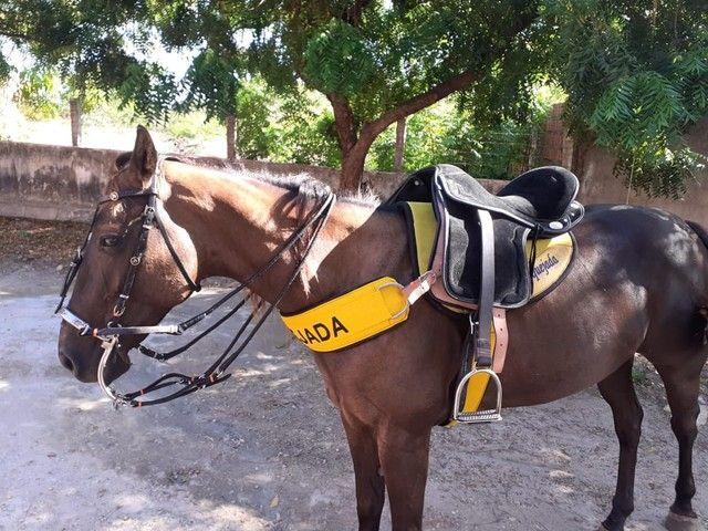 Vendo egua de esteira ou troco em cavalo - Foto 4