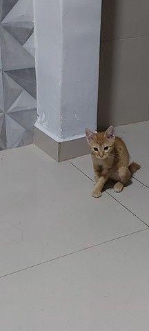 Doação gato macho - Foto 2