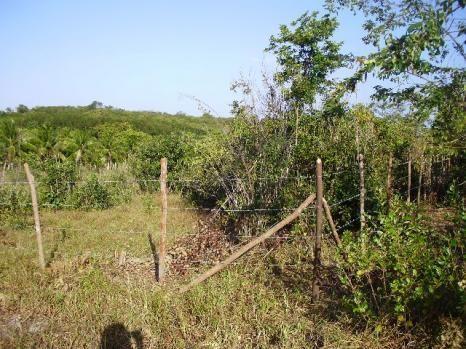 Terrenos em Pium de vários tamanhos e preços - Foto 5