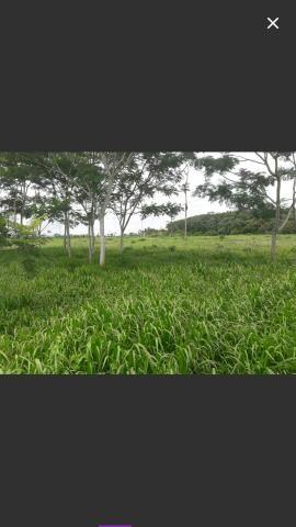 Vendo fazenda de 9 mil hectares com 2, 600 formada na Beira