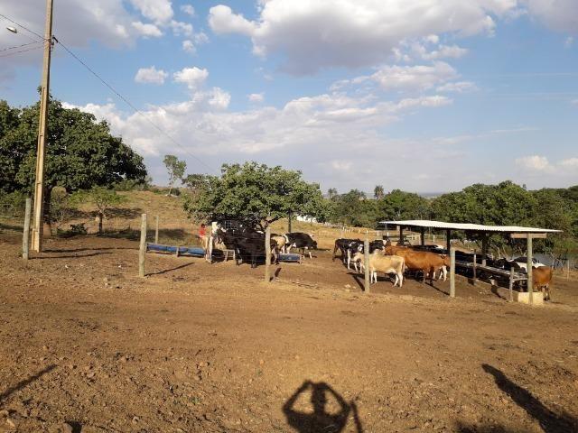 Fazenda à venda ou troca R$ 12 mil o Hectare- Zona Rural - Luziânia/GO - Foto 8