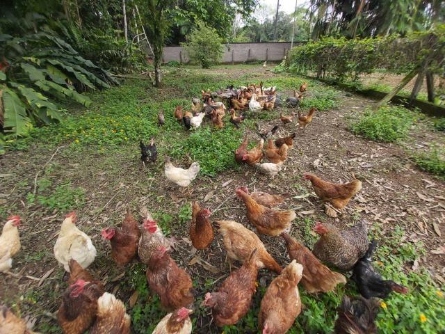 Ovos caipira - leia o anúncio - Foto 4