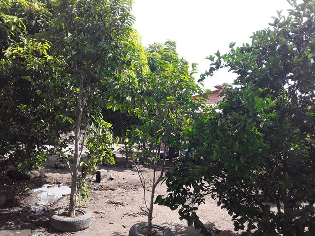 Vendo uma casa em mojui dos campos - Foto 3