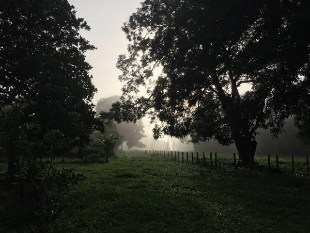 Bela fazenda com 450 hectares, super estruturada em Itapecuru -Mirim! - Foto 3