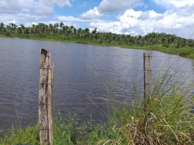 Bela fazenda com 450 hectares, super estruturada em Itapecuru -Mirim! - Foto 12