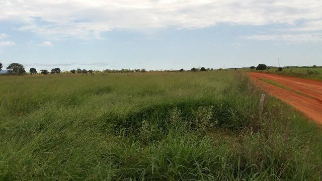 (Fazenda com 297ha em Mato Grosso) no município de Alto Paraguai(MT-409 KM35) - Foto 5