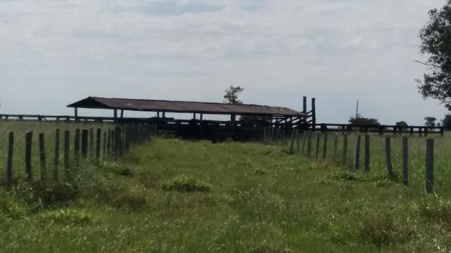 (Fazenda com 297ha em Mato Grosso) no município de Alto Paraguai(MT-409 KM35) - Foto 4