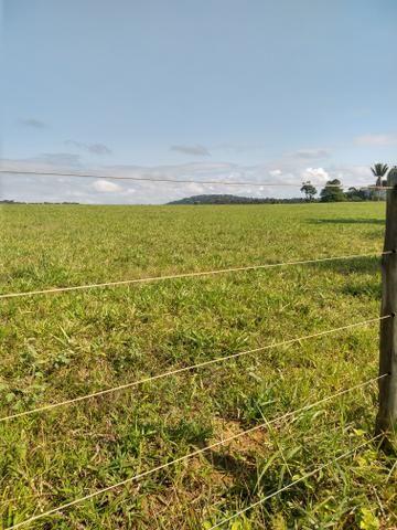Vendo Fazendas - Foto 3