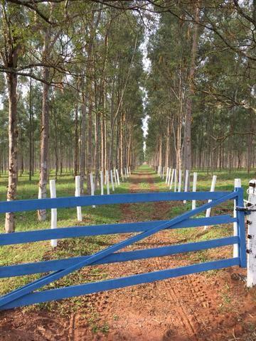 Fazenda em Frutal Minas Gerais Triângulo Mineiro - Foto 18