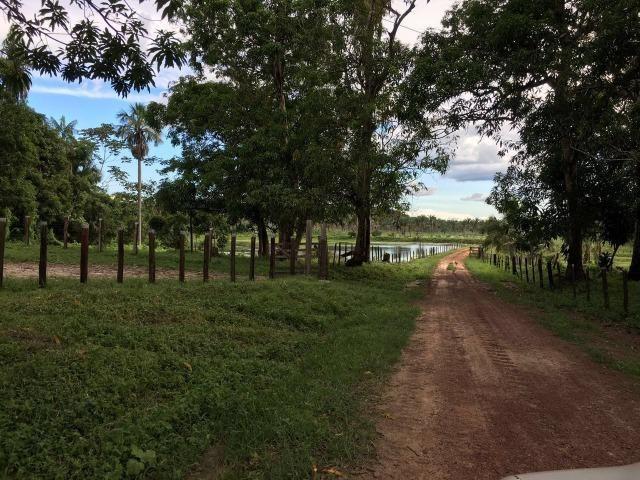 Bela fazenda com 450 hectares, super estruturada em Itapecuru -Mirim! - Foto 9