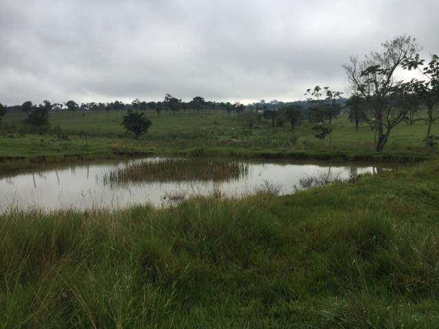 25 Alqueires-Avelinópolis Goiás-Próx. Goiânia-Excelente Preço R$ 150.000,00 o Alqueire - Foto 2
