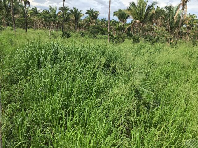 Bela fazenda com 450 hectares, super estruturada em Itapecuru -Mirim! - Foto 8