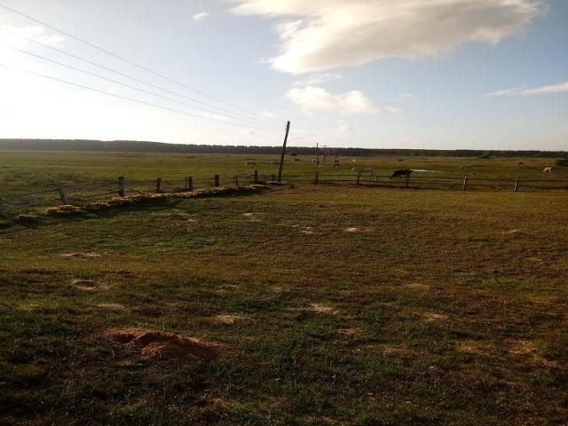 Bela Fazenda - Foto 16