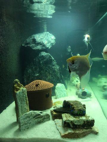 Aquario 400 litros completo - Foto 4