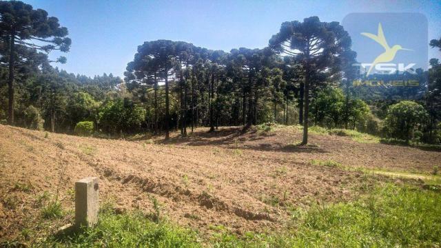 CH0407 - Chácara à venda, 2,5 Alqueires por R$ 195.000 - Zona Rural - Quitandinha/PR - Foto 5