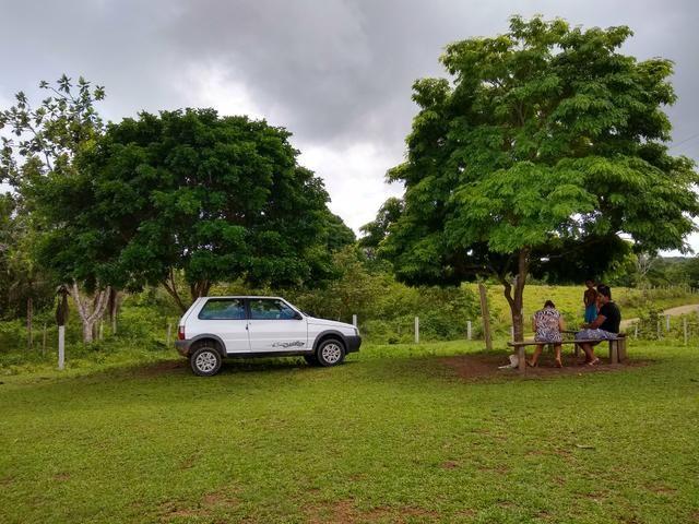 Fazenda de Cacau - Foto 2