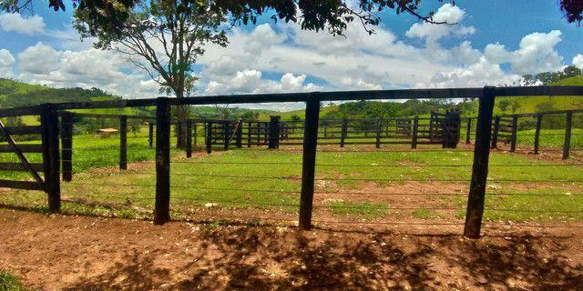 Fazenda especial em inhumas,19 alqueires - Foto 6
