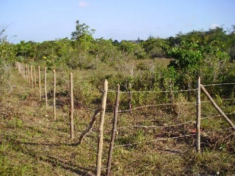 Terrenos em Pium de vários tamanhos e preços - Foto 2
