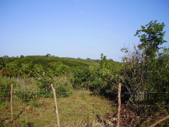Terrenos em Pium de vários tamanhos e preços - Foto 7