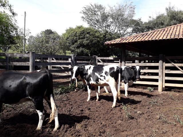 Fazenda à venda ou troca R$ 12 mil o Hectare- Zona Rural - Luziânia/GO - Foto 15