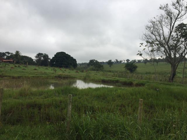 25 Alqueires-Avelinópolis Goiás-Próx. Goiânia-Excelente Preço R$ 150.000,00 o Alqueire - Foto 3