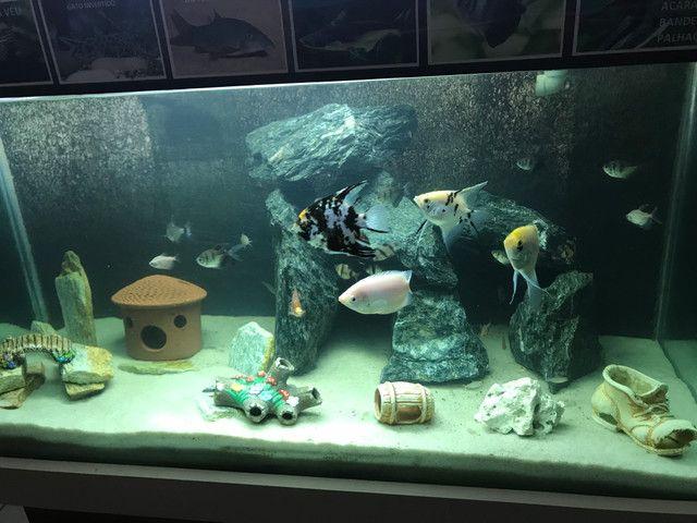 Aquario 400 litros completo - Foto 5