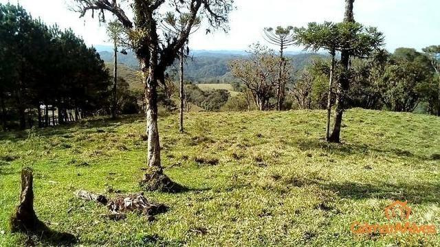 Fazenda para Venda, São Bento do Sul / SC, bairro Sertãozinho - Foto 12