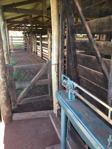 Fazenda em Frutal Minas Gerais Triângulo Mineiro - Foto 10