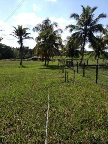 Bela fazenda com 450 hectares, super estruturada em Itapecuru -Mirim! - Foto 7