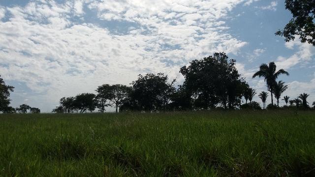 (Fazenda com 297ha em Mato Grosso) no município de Alto Paraguai(MT-409 KM35) - Foto 19