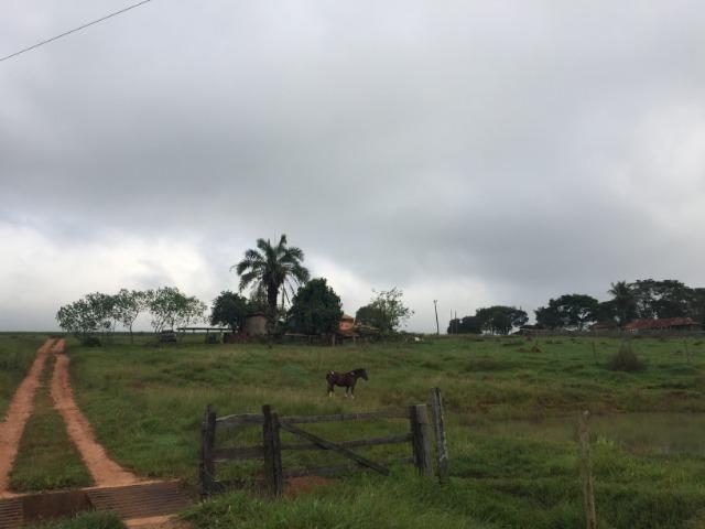25 Alqueires-Avelinópolis Goiás-Próx. Goiânia-Excelente Preço R$ 150.000,00 o Alqueire - Foto 11