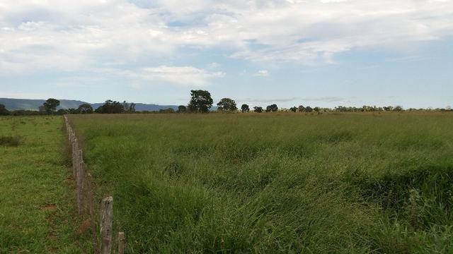(Fazenda com 297ha em Mato Grosso) no município de Alto Paraguai(MT-409 KM35) - Foto 6