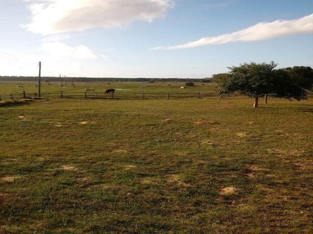 Bela Fazenda - Foto 15