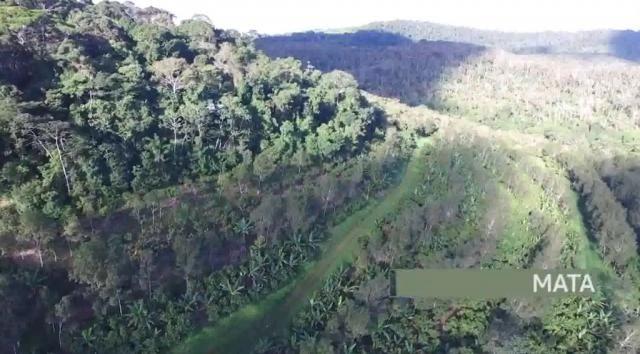 Fazenda de Cacau, Látex e Mogno no Brasil - Cidade Ituberá-BA - Foto 15