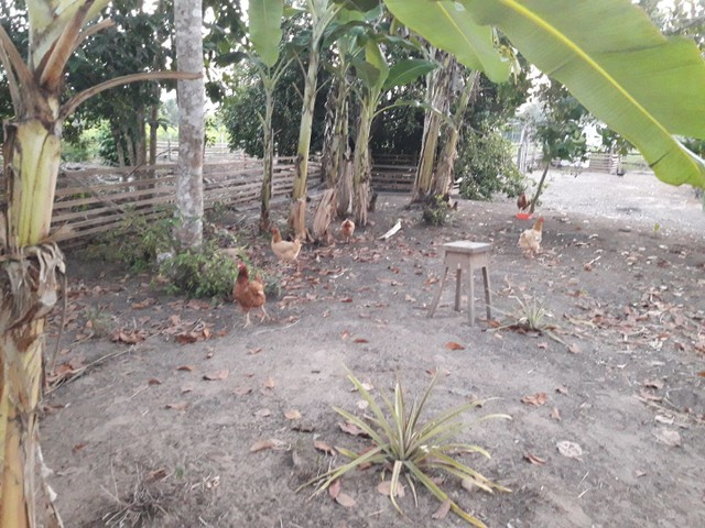 Vendo uma colônia em Sena Madureira Rio purus - Foto 18