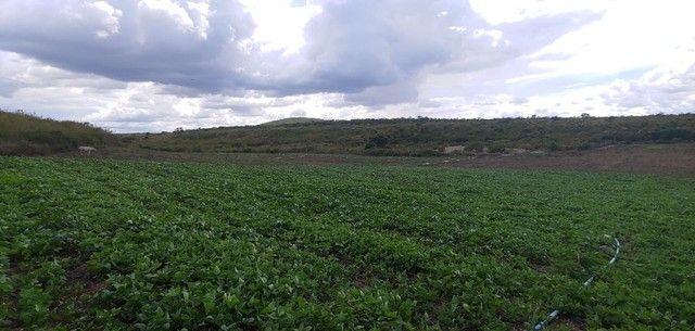 fazenda permuta(Grãos e frutas)Pecuária na chapada diamantina - Foto 8