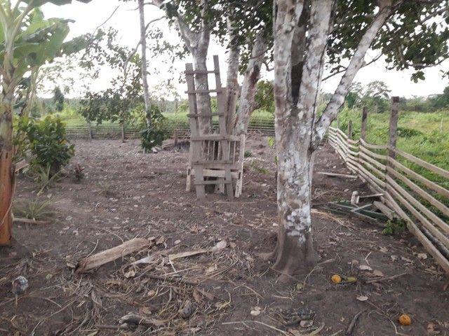 Vendo uma colônia em Sena Madureira Rio purus - Foto 15